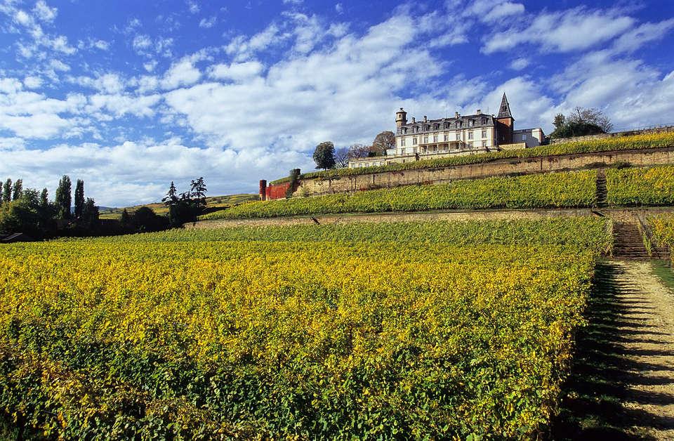 Château d'Isenbourg  - Isenbourg_vignes_.jpg