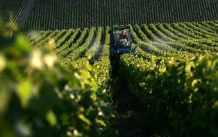 Week-end avec visite et dégustation de vins dans un domaine viticole près de Chablis (2 nuits)