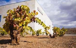 Escapada entre viñedos en Cariñena