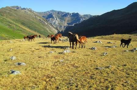 Mini Vacaciones: Bienestar termal en la naturaleza en pensión completa (desde 3 noches)