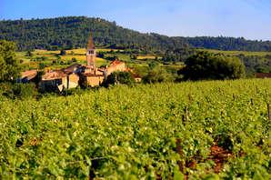 Charme et décourverte de la vigne près de la magnifique cité médiévale de Carcassonne