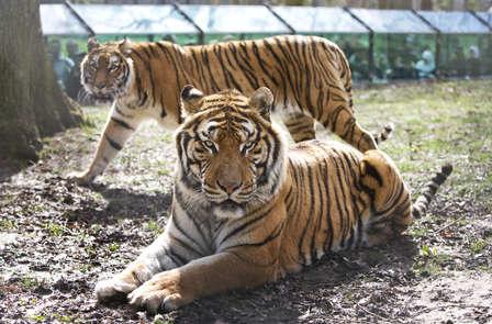 Week-end avec visite du Zoo de Thoiry et son château