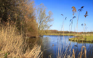 Weekendje weg met diner en boottocht door natuurpark de Biesbosch (vanaf 2 nachten)