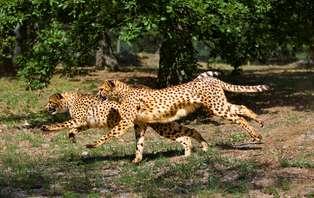 Offre spéciale: Week-end au Zoo de Thoiry en couple ou en famille