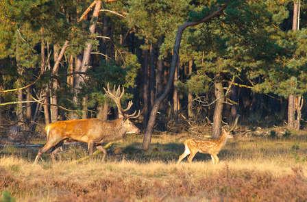 Week-end dans la nature dans la Veluwe