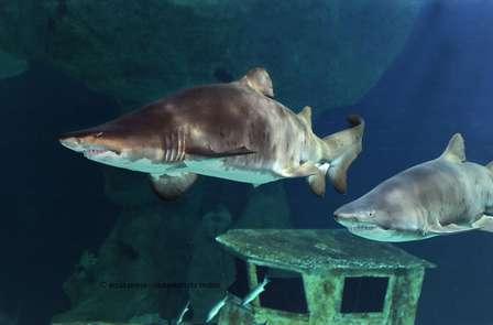 Week-end en famille avec entrée à l'Océarium du Croisic