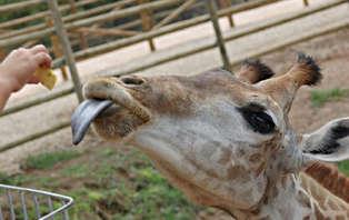 Escapada con toque romántico y entradas al Zoológico de Murcia