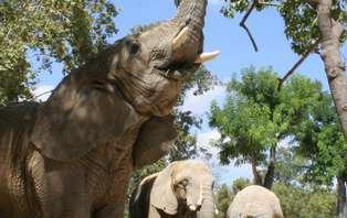 Séjour à Barcelone avec tickets pour le Zoo