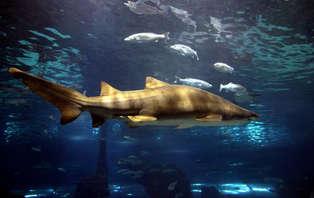 Séjour avec ticket pour l'aquarium de Barcelone