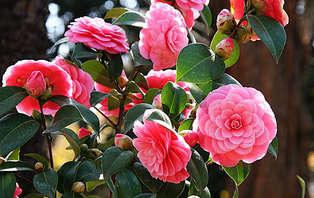 Escapada romántica con visita al Jardín Botánico del Pazo de la Saleta