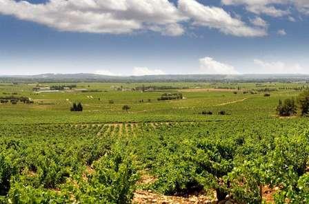 Week-end détente avec une dégustation de vin aux portes d'Avignon