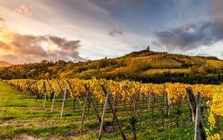 Offre Spéciale : Week-end découverte et dégustation sur la route des Vins