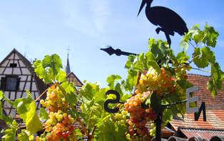 Week-end découverte avec visite de cave en Alsace