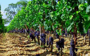 Escapada entre viñedos con cena en Cariñena- Zaragoza (desde 2 noches)