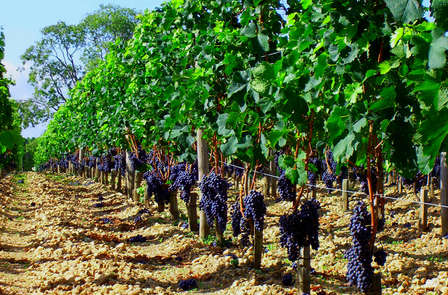 Escapada entre viñedos con cena en Cariñena (desde 2 noches)