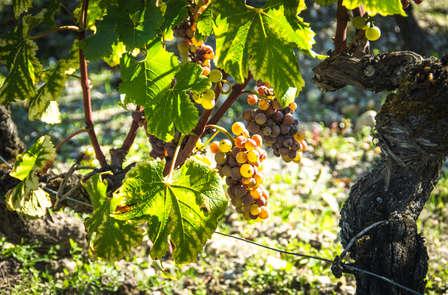 Offre Spéciale: Week-end oenologie et dégustation à proximité de Bordeaux
