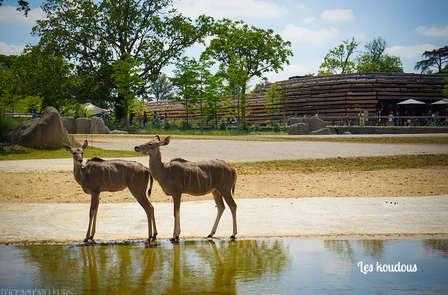 Relaxweekend inclusief toegang tot het Parc Zoologique de Paris