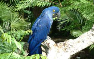 Week-end découverte avec escapade au Parc des Oiseaux, à coté de Lyon