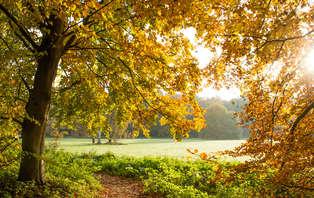 Heerlijk Hollands weekendje weg in bosrijk Twente (geldig tot 16 feb)