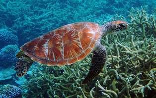 Week-end découverte du monde marin en couple ou en famille à Océanopolis, gratuité pour les enfants!