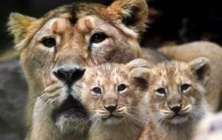 Séjour en famille au Parc Zoologique de Mulhouse