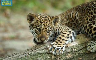 Week-end découverte avec entrées pour le ZooParc de Beauval