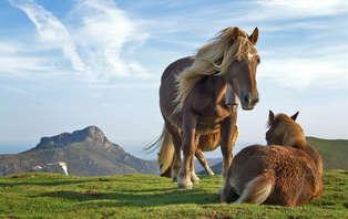 Escapada romántica con cena y paseo en caballo en Arcos de la Frontera (desde 2 noches)