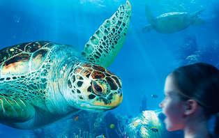 Geniet van een gezellig familieweekend aan zee en bezoek Sealife