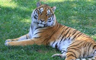 Week-end découverte à Nantes avec entrées pour le parc animalier planète sauvage