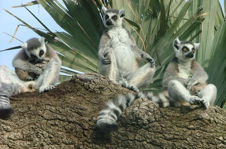 Week-end au Zoo du Bioparc près de Saumur