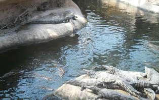 Week-end avec visite de La Planète des crocodiles