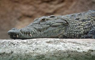 Week-end en famille avec entrées sur la Planète des crocodiles