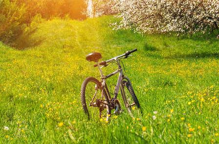 Geniet van een fietsweekend in de schitterende Betuwe