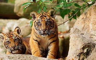 Offre spéciale : Week-end à la découverte du ZooParc de Beauval