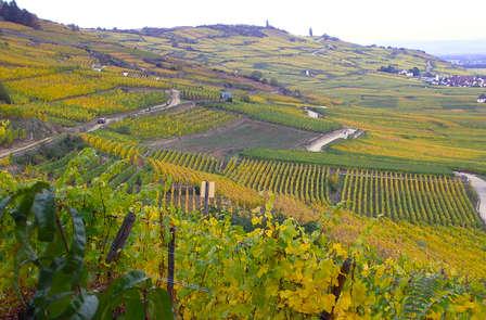 Week-end détente et dégustation de vins alsaciens