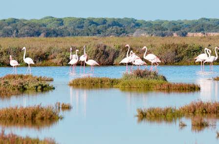 Escapada Relax con masaje cerca de Doñana