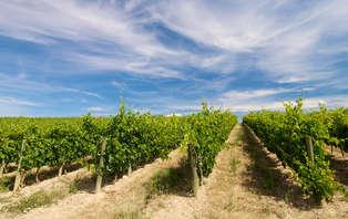 Oferta especial: Escapada en La Rioja con visita de bodega (desde 2 noches)