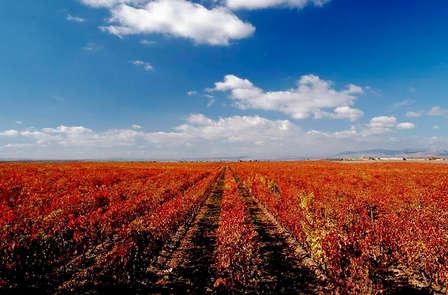 Escapada con Visita a las Bodegas Rioja Alta y toque romántico en Haro