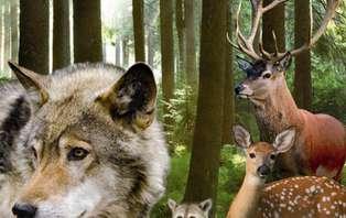 Familieweekend in junior suite met diner en toegang tot dierenpark Forestia (vanaf 2 nachten)
