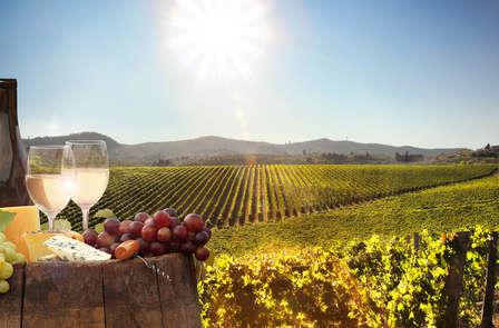 Week-end oenologique avec visite de cave et dégustation de vins près d'Avignon