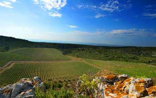 Escapada a una gran explotación finca vinícola del Languedoc, entre tierra y viñas