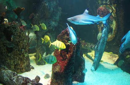 Ontdek de onderwaterwereld met het hele gezin