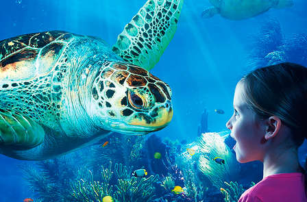 Strand, zee en toegang tot Sealife (kids for free)