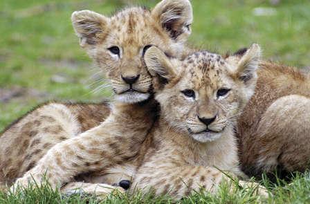 Échappez-vous en safari avec des animaux majestueux (à partir de 2 nuits)