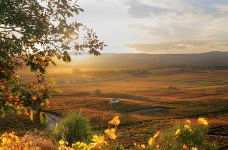 Escapada con degustación de vinos en Bodega (desde 2 noches)