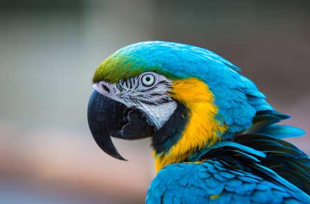 ¡Ven a conocer las atracciones y animales de Marineland!