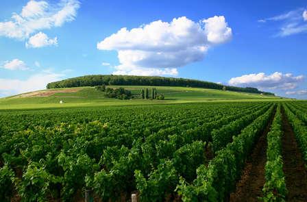 Week-end découverte des vins près de Chinon