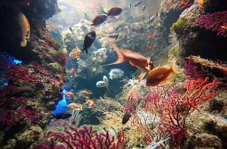 Week-end découverte avec entrées pour l'aquarium de la Rochelle
