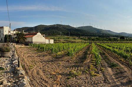 Profitez d`un dîner saveur rurale avec dégustation de vins à Valls
