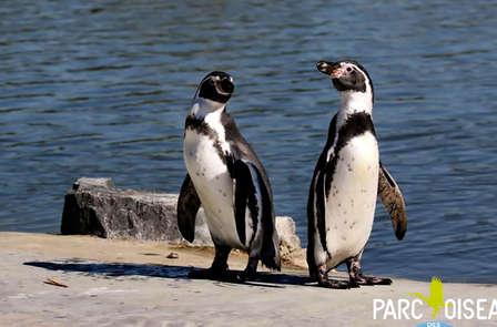 Week-end découverte avec escapade au parc des Oiseaux, au bord des étangs de la Dombes